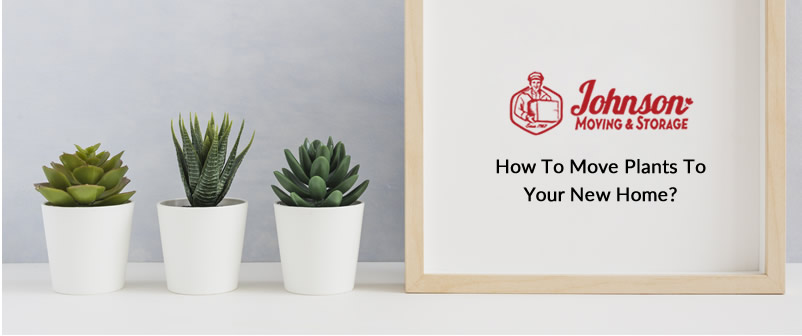 How To Move Plants To Your New Home